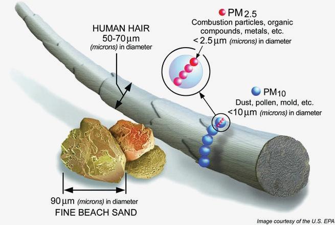 การเปรียบเทียบขนาดของฝุ่น PM 10 และ PM 2.5 ต่อขนาดเส้นผมมนุษย์และเม็ดทราย