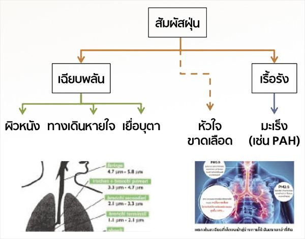 ผลกระทบจากการสัมผัสฝุ่นจิ๋ว PM 2.5
