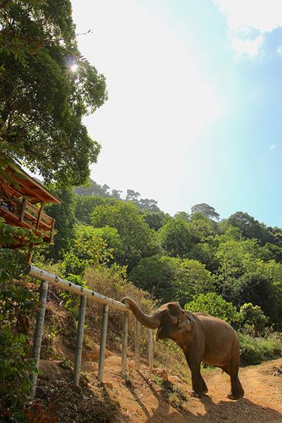 ปางช้างเชิงอนุรักษ์