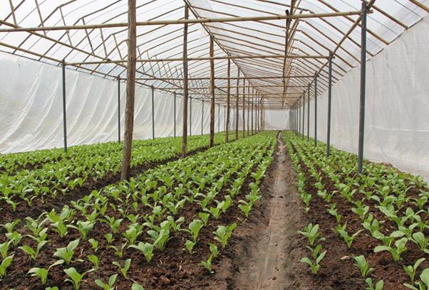 แนวทางการปลูกพืชผักบนพื้นที่สูงให้ได้คุณภาพ และเป็นมิตรต่อสิ่งแวดล้อม